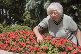senior-woman-gardening-21407441